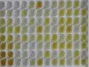 兔白介素2(IL2)检测试剂盒(酶联免疫吸附试验法)