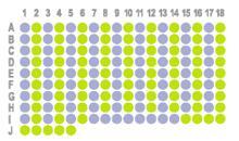生存期胃癌167点组织芯片HStm-Ade167Sur-01