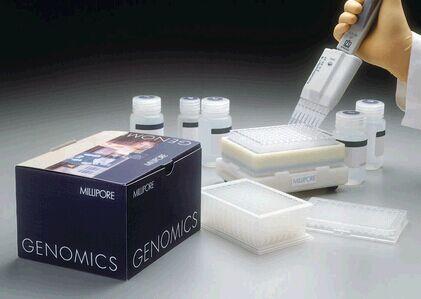 小鼠瘦素(LEP)elisa试剂盒