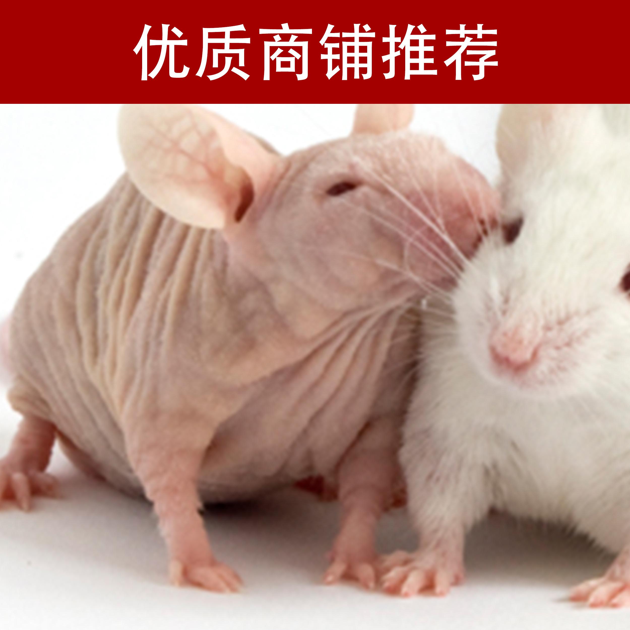 裸小鼠移植瘤实验
