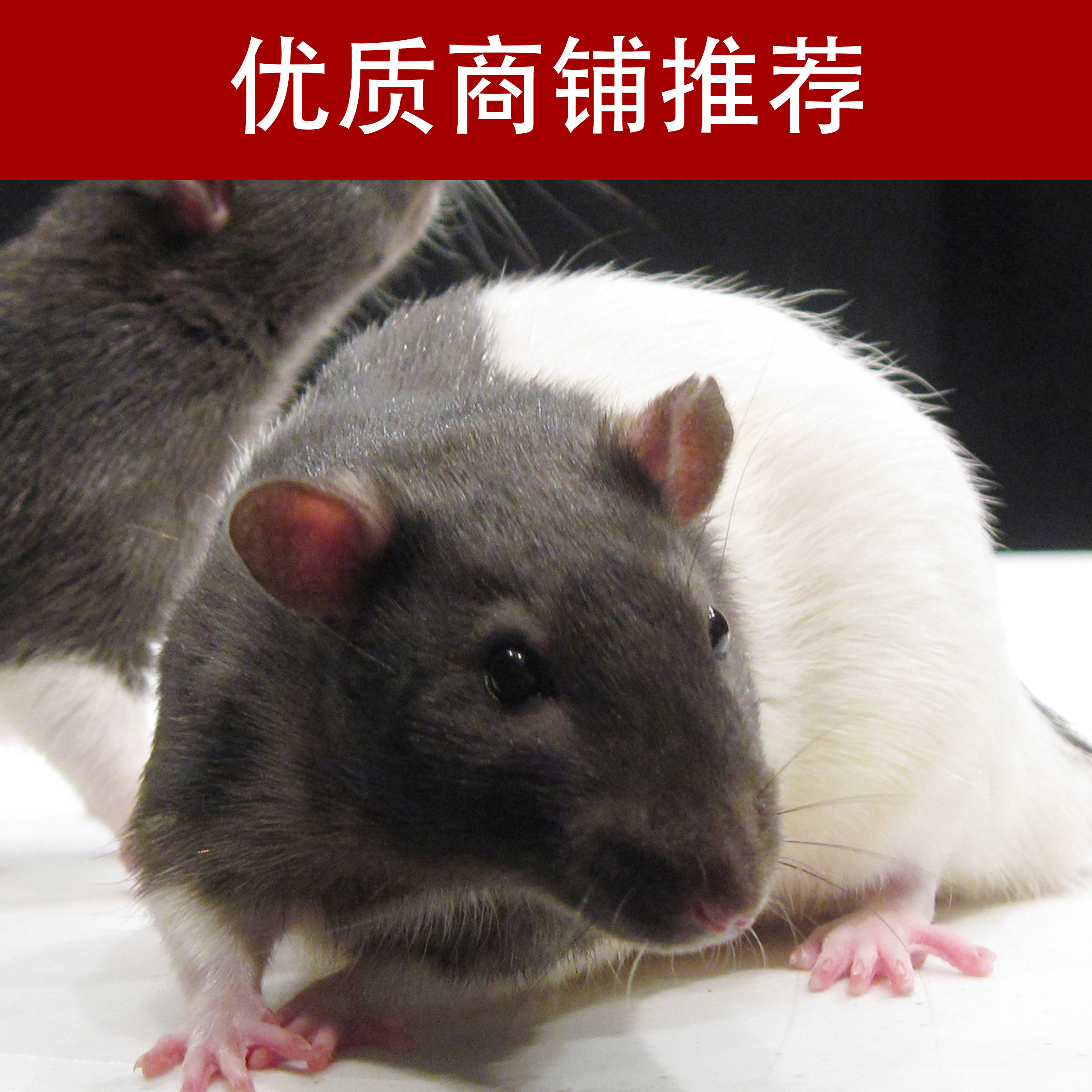 大小鼠实验动物模型制备技术服务