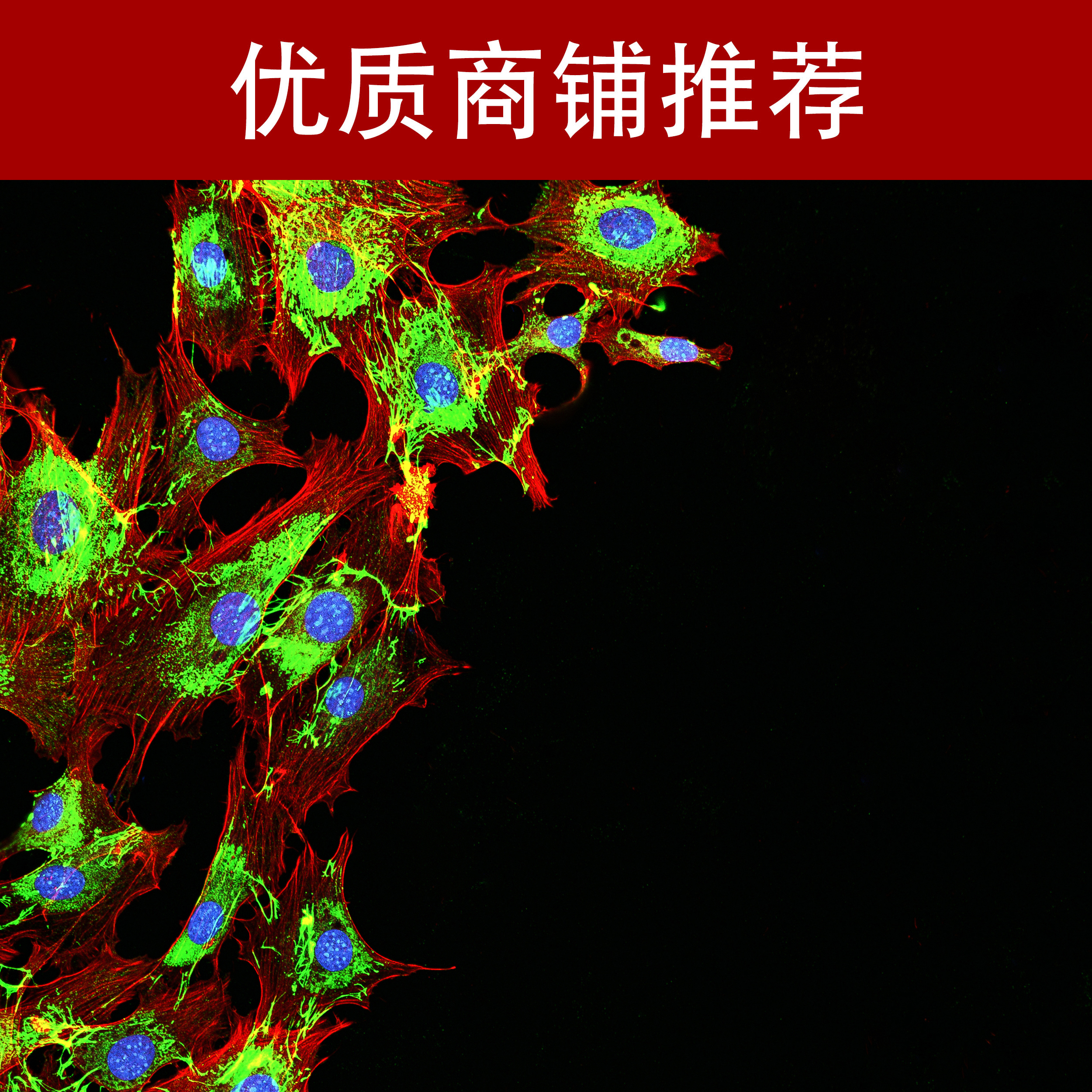 免疫熒光檢測技術服務
