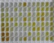 猪睫状神经营养因子(CNTF)检测试剂盒(酶联免疫吸附试验法)
