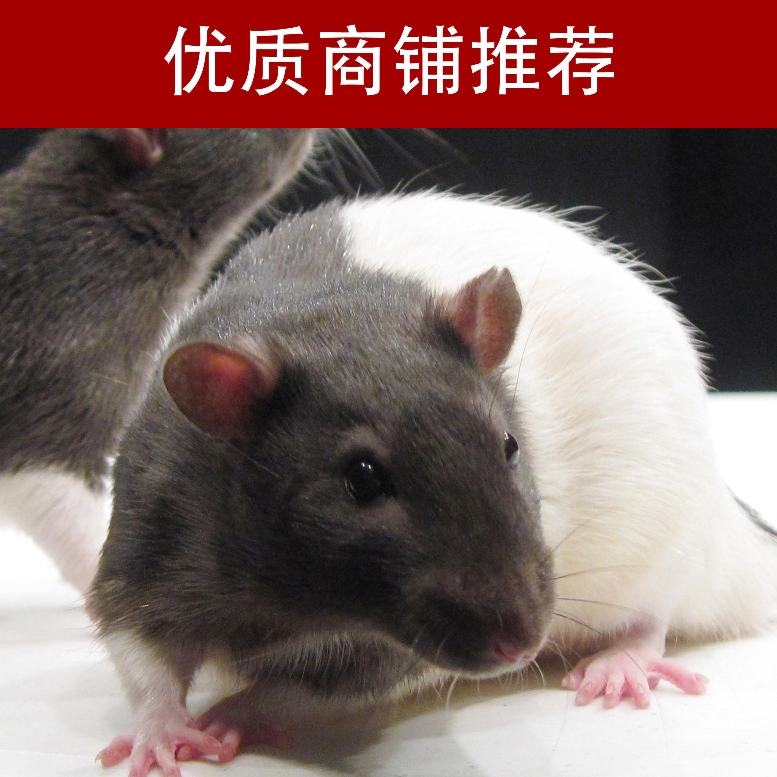 动物药效评价技术服务
