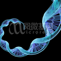 长链非编码RNA测序/LncRNA测序