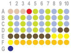食管癌60点组织芯片HEso-Squ060CD-01