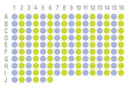 结肠癌150点组织芯片HRec-Ade150CS-02