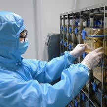 转基因动物/ES打靶技术/基因敲除鼠纯合子筛选、繁育、保种