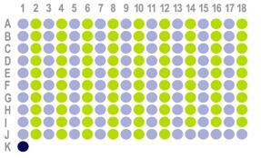 食管癌180点组织芯片HEso-Squ180Sur-03