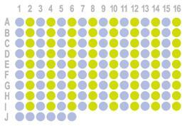 生存期胰腺癌120点组织芯片HLugS150Su02