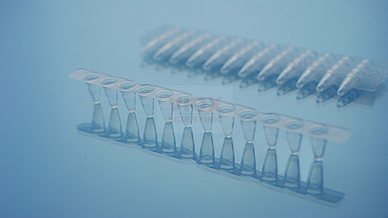 PCR十二联管