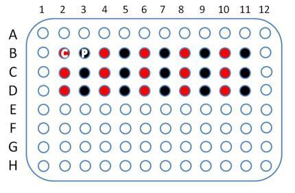 胃癌cDNA组织芯片30点,cDNA-HStmA030CS01