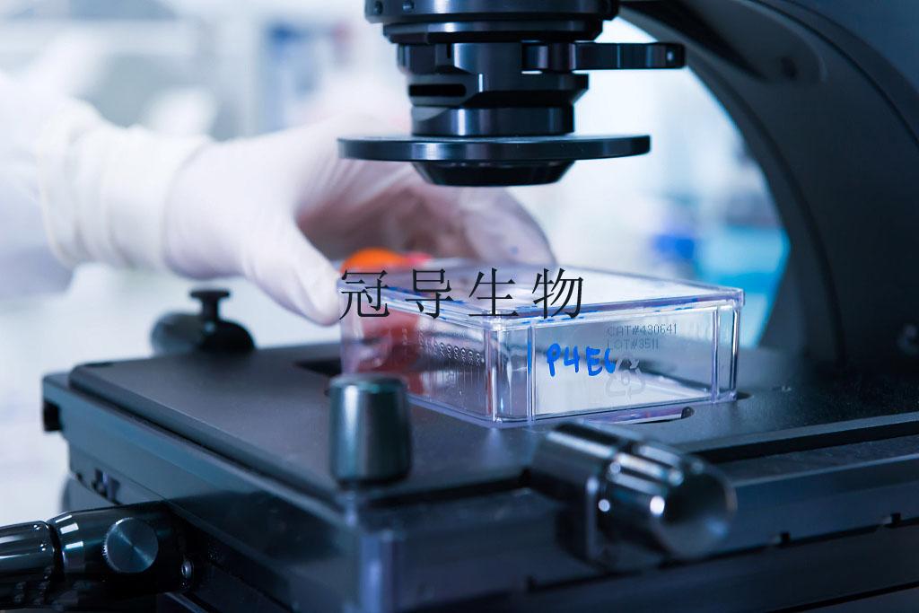 Hs683细胞:人脑胶质瘤细胞