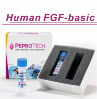 Human FGF-basic