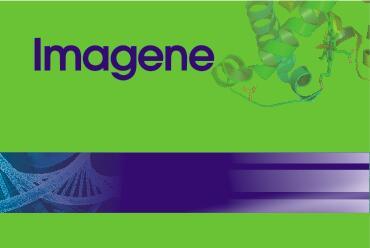 组织细胞PCR直接扩增试剂盒