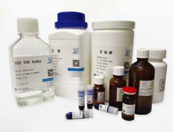 BSA V 牛血清白蛋白 第五组分