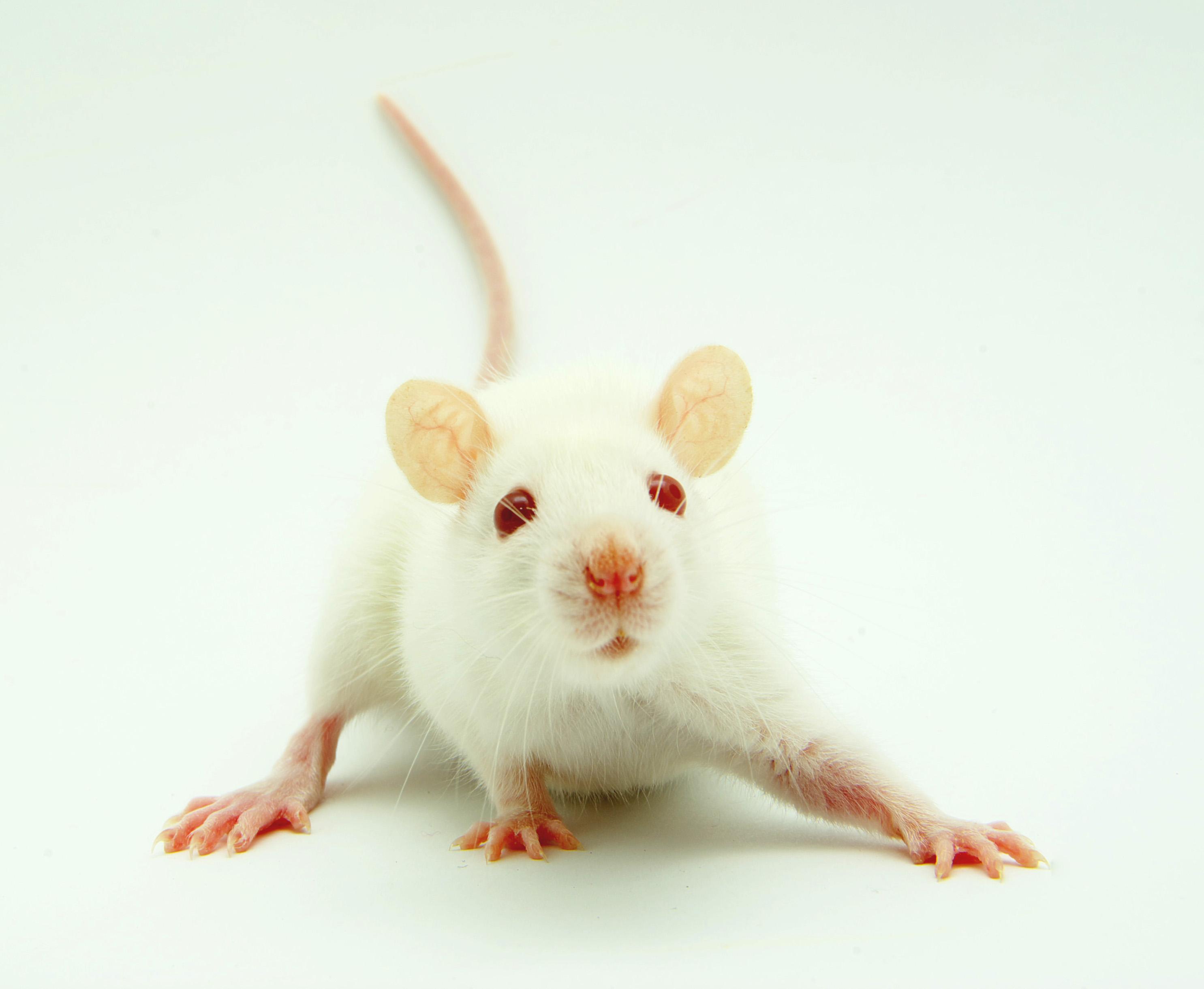 全身性基因敲除小鼠定制(≥3个品系)