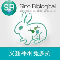 ABI2|ABI2 antibody|ABI2抗体(anti-Human兔多抗)