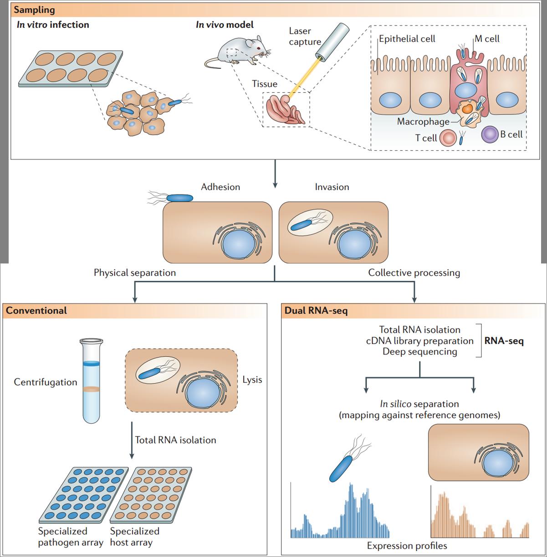 转录组mRNA 测序