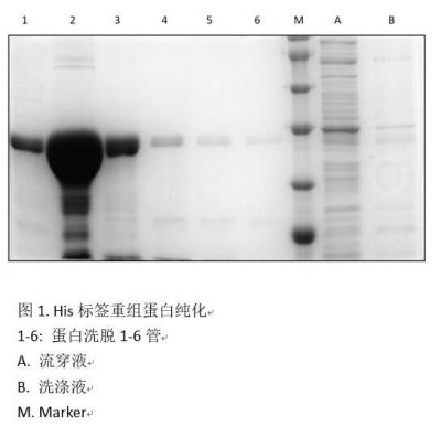 His-标签蛋白纯化试剂盒 His-tag Protein Purification Kit