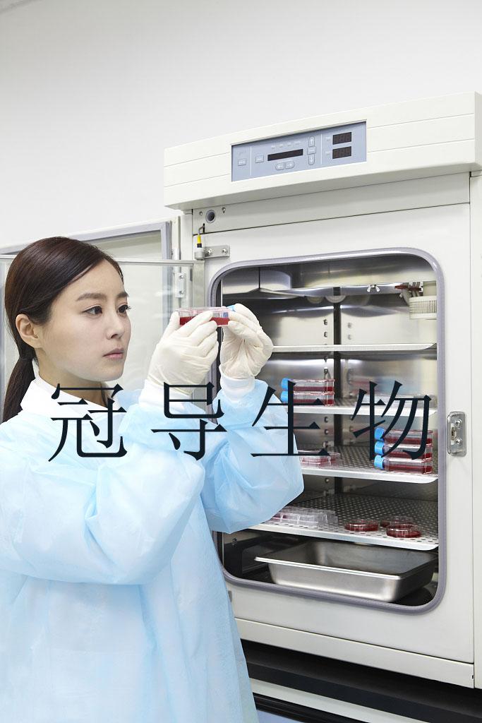 OE-33细胞:人食管癌细胞