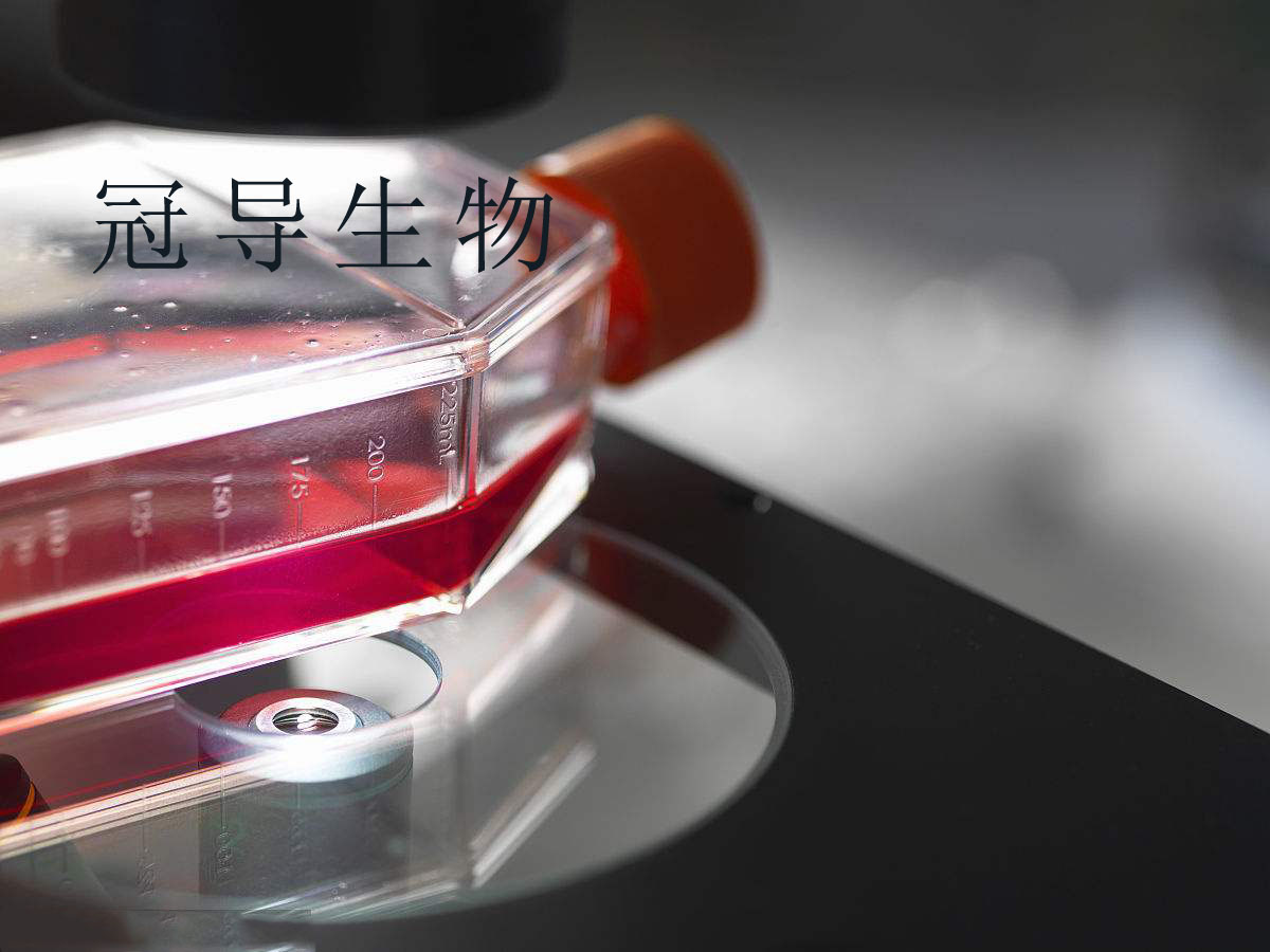 NCM356细胞:结直肠腺癌细胞