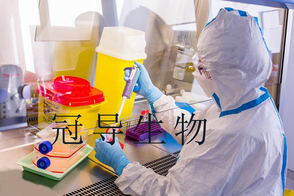 P31/FUJ细胞:人急性单核白血病细胞
