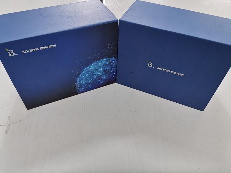 进口-人清道夫受体BELISA检测试剂盒