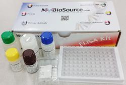 Rat Estradiol E2 ELISA Kit 大鼠雌二醇检测试剂盒  现货  MBS774596