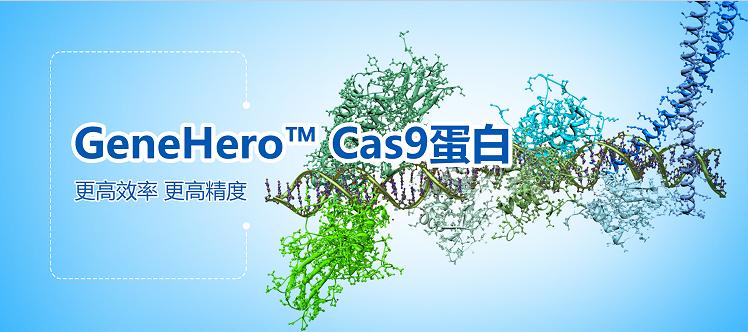 Cas9蛋白