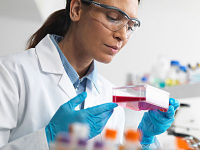 大鼠卵巢颗粒细胞/免疫荧光鉴定/赛百慷(iCell)