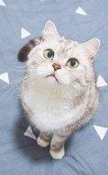 库库的cat