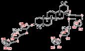 多被银莲花皂苷R8124961-61-1