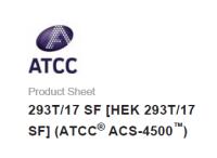 ATCC 细胞 293T/17 SF [HEK 293T/17 SF]