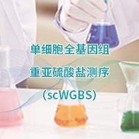 單細胞及微量細胞全基因組甲基化測序 (scWGBS)