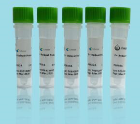 玉米内源基因核酸检测试剂盒(PCR-荧光探针法)