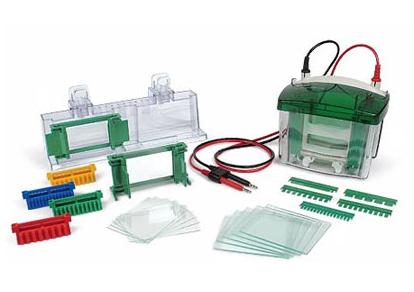 价格7000伯乐Bio-Rad伯乐Mini-PROTEAN Tetra cell小型垂直电泳槽(165-8001)现货总代理