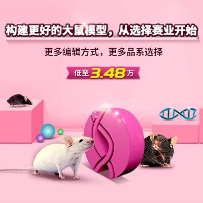基因編輯大鼠