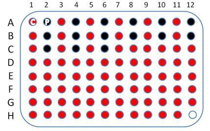 [结肠癌,95点]cDNA-HColA095Su01