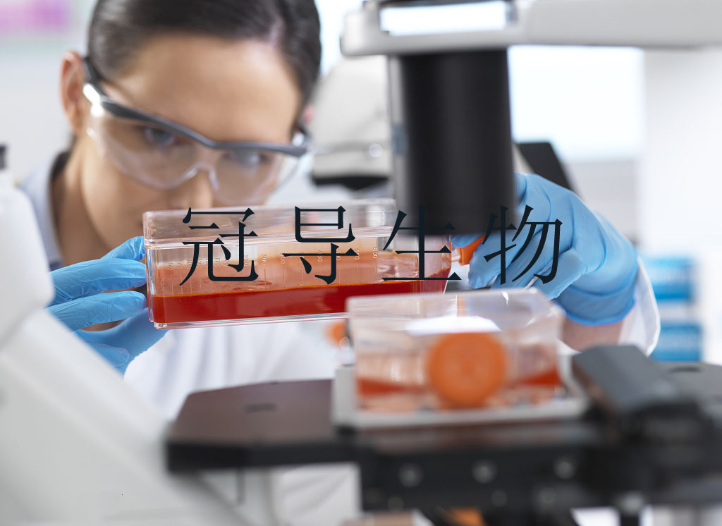 SW1417[SW-1417] Cell 人结肠癌细胞