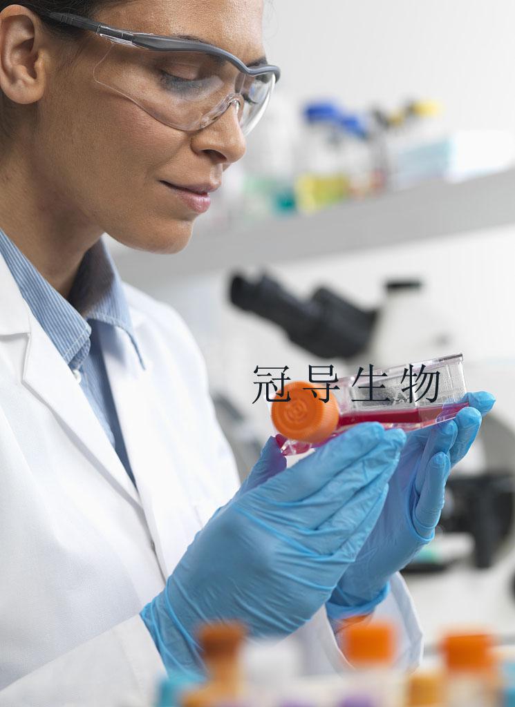 NCI-H1395[H1395] Cell 人肺癌细胞