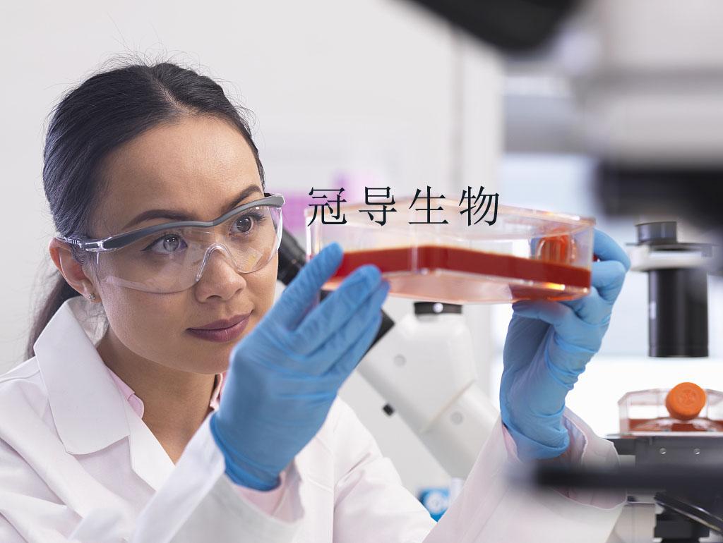 NCI-H1573[H1573] Cell 人肺癌细胞