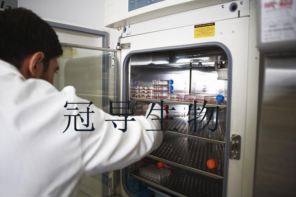 NCI-H23[H23] Cell 人肺癌细胞