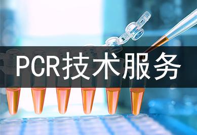肠出血性大肠杆菌O157核酸检测试剂盒(PCR-荧光探法)
