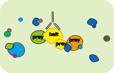 免疫共沉淀(co-ip)