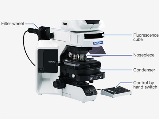 山东BX53奥林巴斯荧光显微镜