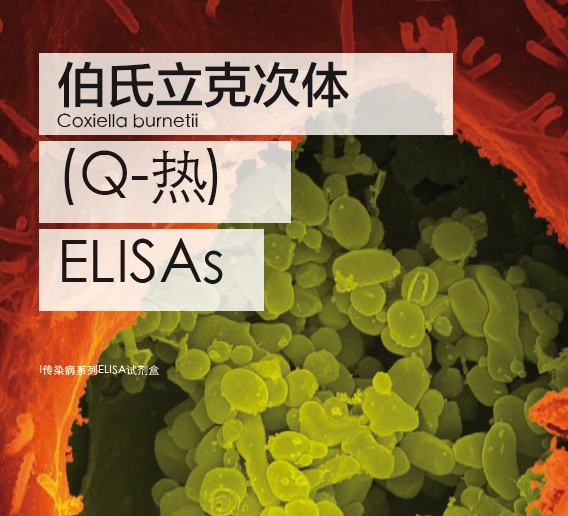伯氏立克次氏体(Q热)ELISA 检测