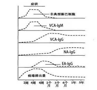 EBV抗体与病程关系.jpg