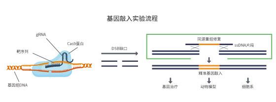 ssDNA合成