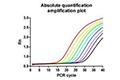 实时荧光定量 PCR 检测